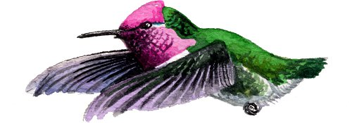 http://gigadb.org/images/data/cropped/bird/calypte_anna.png