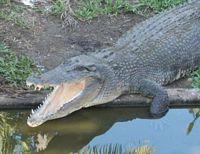 http://gigadb.org/images/data/cropped/saltwater_croc.jpg