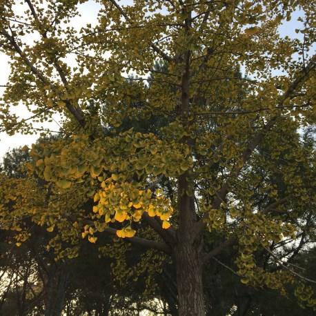 http://gigadb.org/images/uploads/image_upload/Images_290.png